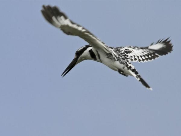 10 Day Birding Exprience Photos