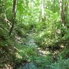 Te Pua Hut to Mangatoatoa Hut Track
