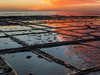 Tessellated Pavement, A Rare Rock Formation