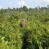 Tesso Nilo Parque Nacional