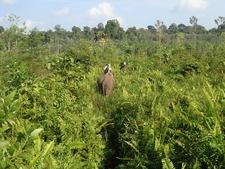 Tesso Nilo National Park