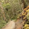 Te Waiiti Stream via Te Pona a Pita Track
