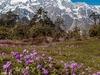 Thangu Valley - North Sikkim