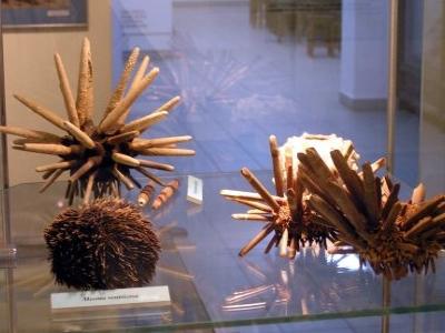 The Andrzej Myrcha University Museum Of Nature