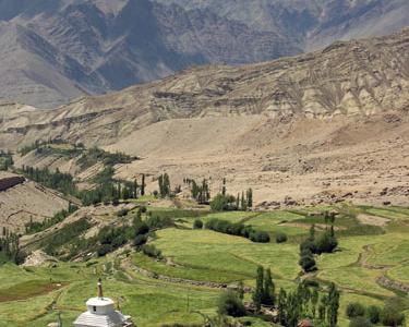The Baby Trek In Likir Village, Ladakh