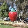 Big Strawberry