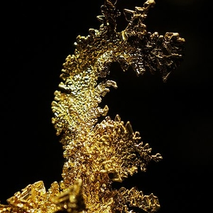 The Dragon, Famous Gold Specimen Found WNW Of Midpines