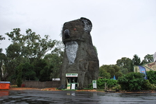 The Giant Koala At Dadswells Bridge