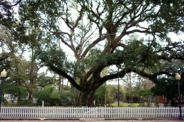 The Hammond Oak