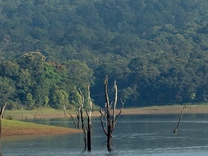 The Best of Kerala - Alleppey, Munnar And Thekkady Tour