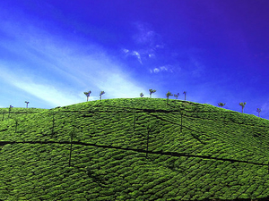 Thekkady Holiday Package Photos