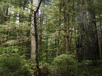 A Pequena Trail Hills Bald