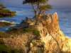 The Lone Cypress A Symbol