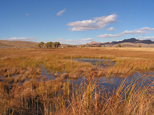 The Middle Marsh