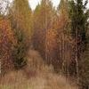 The Natural Footpath Poland