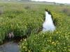 The Niobrara River Flowing Through Agate