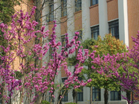 Universidad de Tongji