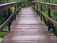 The Path Footbridge - Narew National Park
