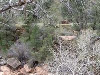 El Pine Creek Canal de Riego