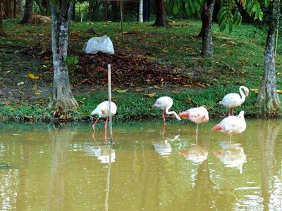 The Putrajaya Wetlands