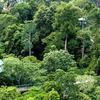 The Rainforest Discovery Centre - Sandakan