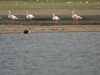 Thol Lake Gujarat India
