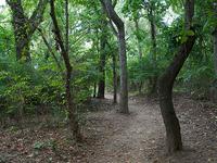 Thompson Trail 121