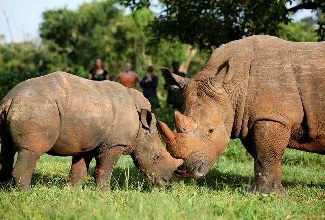 3 Day Murchison Falls Safarie Photos