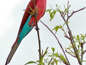 Special Birding Safari Photos