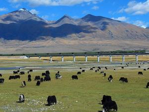6days Beijing - Lhasa Tibet Train Tour Photos