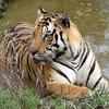 Kanha Jungle Mejor Plan para 3 días