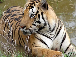 Kanha Best Jungle Plan for 3 Days Photos
