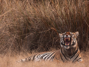 Kanha National Park Jungle Safari Package Photos