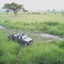 Tigerhino Safari