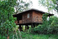 Tiger 'n' Woods Resort