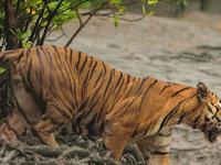 Sundarban National Park And Wildlife Tour
