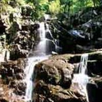 Tolland Forestal del Estado