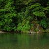Tongariro Forest Conservation Area - Tongariro National Park - New Zealand