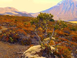Tongariro del Circuito Norte