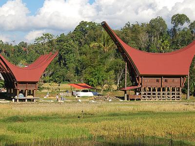 Tongkonan In A Torajan Village