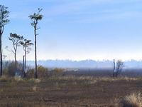 Burnt Pine