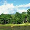Tourist Attractions In Dzanga-Sangha National Park