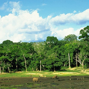 Tourist Attractions In Dzanga-Sangha National Park