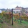 Tour of The Venetian Vineyards