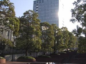 Universidad de Toyo