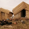 Traditional Huts Along Lake Titicaca Shoreline - Puno City Peru