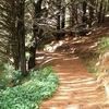 Trail In Mount Victoria Park In Wellington NZ