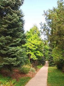 Trail Inside Andrews Arboretum