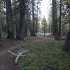 Trail Through Woods To Summit