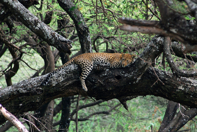 Lake Manyara National Park Photos